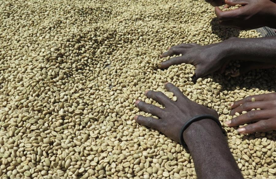 Specialty Coffee Ethiopia Bale Mountain